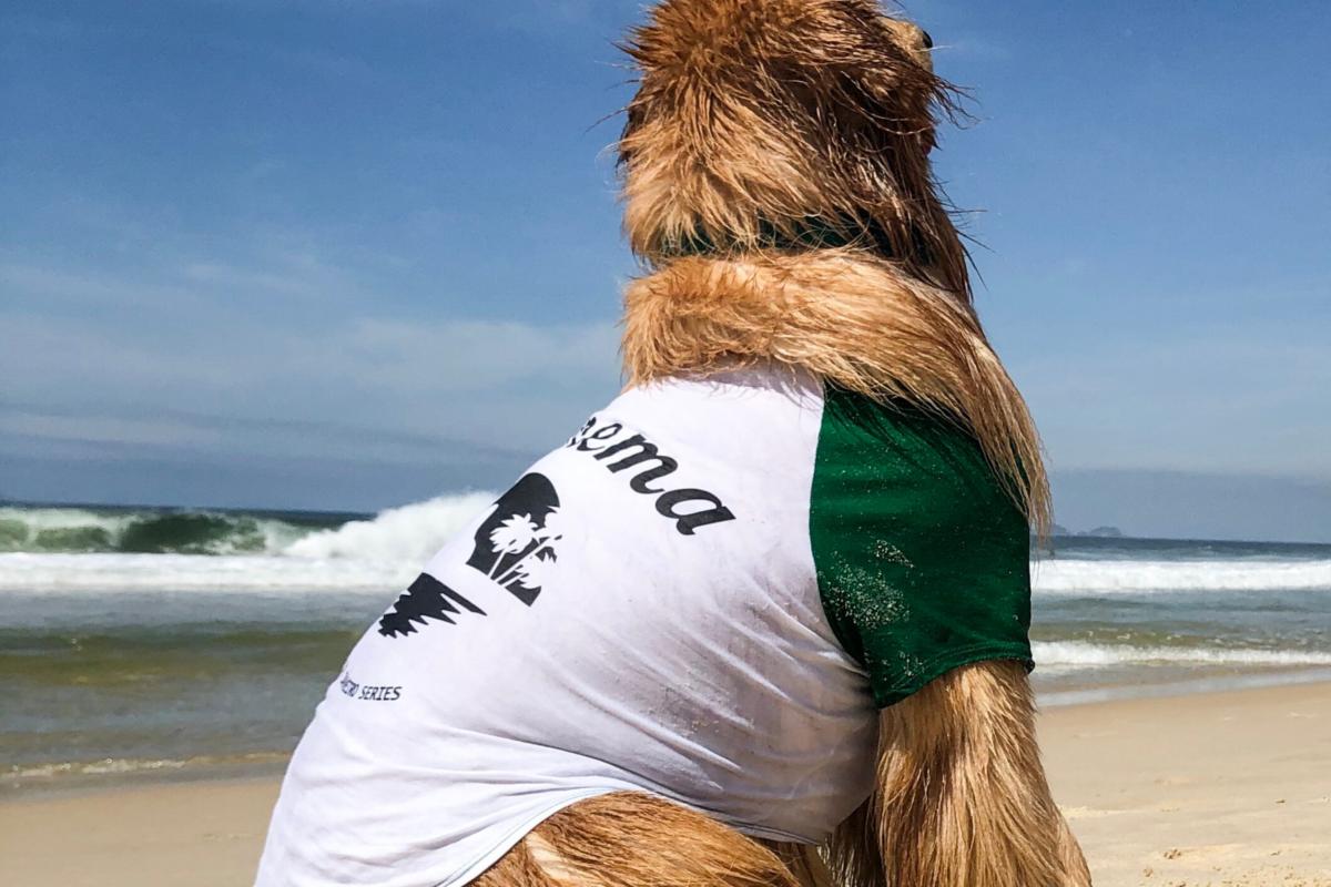 CariocaPup: camiseta Ipanema