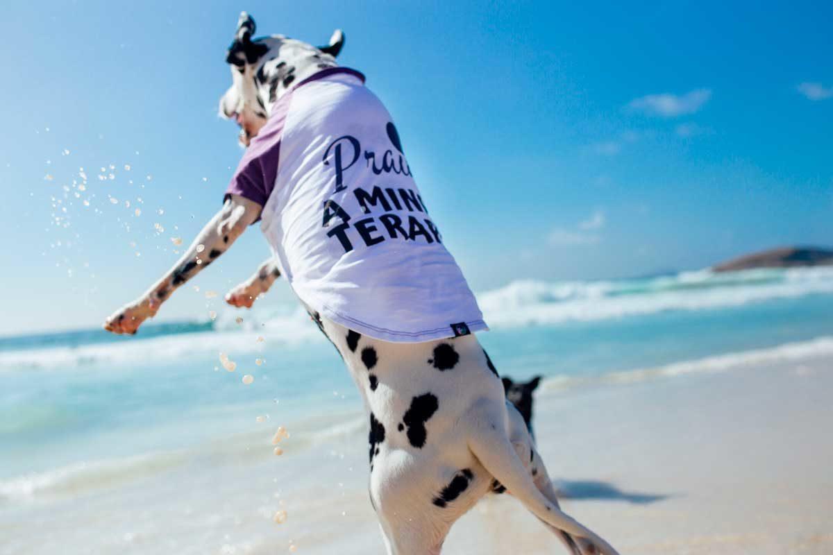 Cachorro com camiseta na praia - CariocaPup