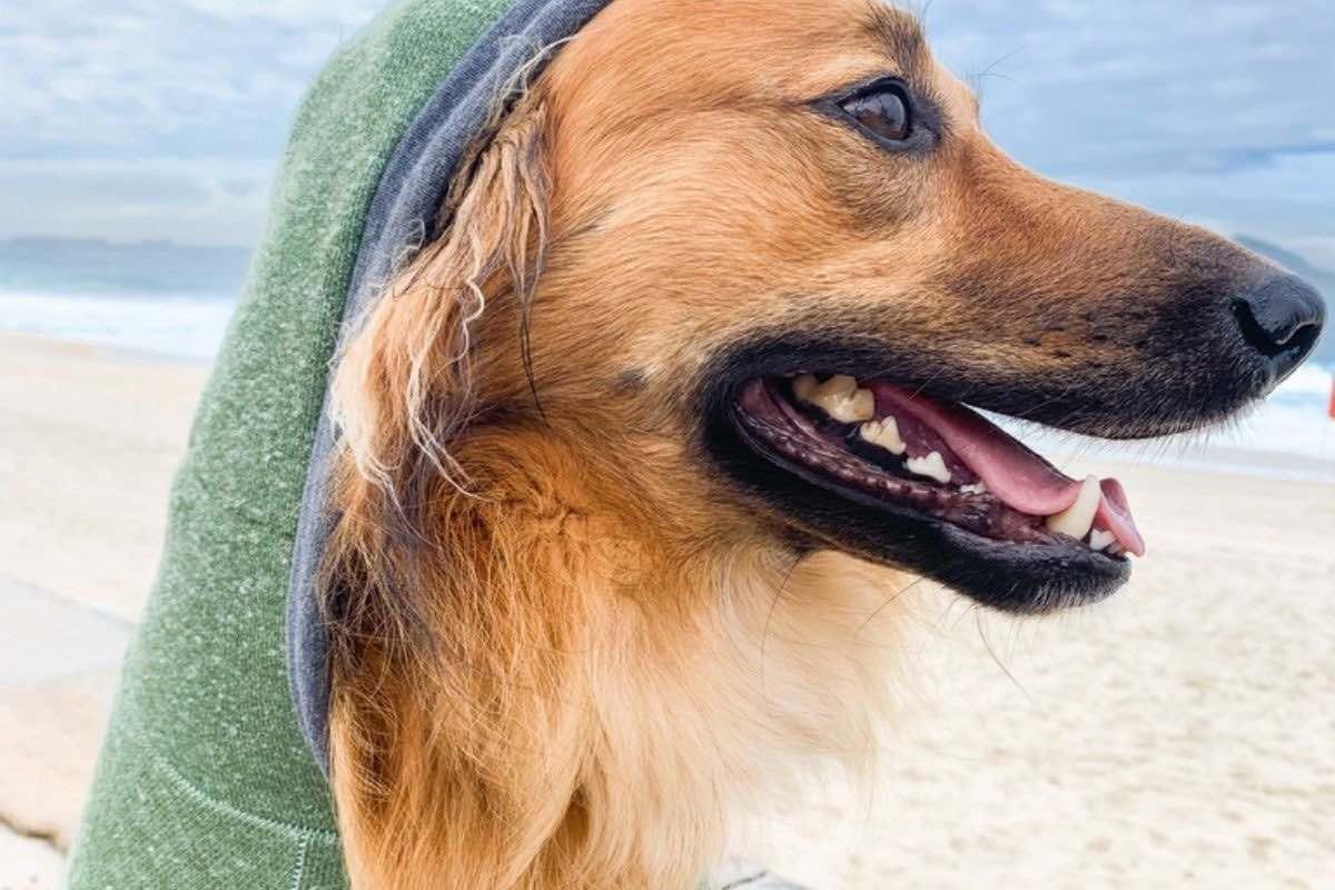 moletom-para-cachorro cariocapup báltico